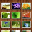 16504 mzl.gggvklqq 125x125 Spring Background by fengmin