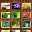 16507 mzl.gggvklqq 125x125 Spring Wallpaper HD by fengmin