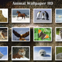 16596 1 125x125 Animals WP HD for iPad by fengmin