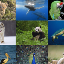 16596 2 125x125 Animals WP HD for iPad by fengmin