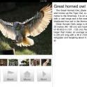 Birds Kingdom by thumbsoft